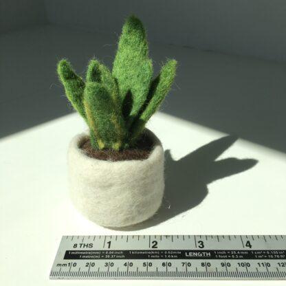 Felt pot plant